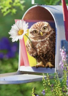 BABY OWL IN MAILBOX ENCOURAGEMENT
