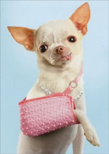 DOG IN SLING GET WELL CARD