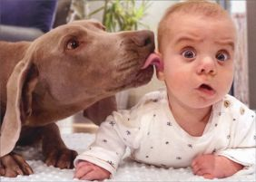 DOG LICKS BABY'S EAR BIRTHDAY