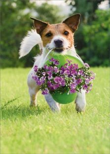 DOG WITH BUCKET OF FLOWERS THA