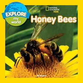 HONEY BEES-EXPLORE MY WORLD BO