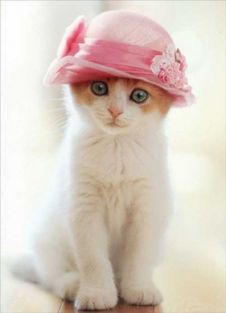 CAT WEARS PILLBOX HAT MOTHER'S DAY-LARGE
