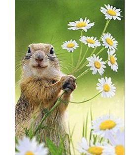 avanti-press-squirrel-holding-flowers-thank-you_01.jpeg