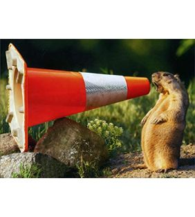avanti-press_groundhog-shouting-into-cone-funny-humorous-congrats-card_01.jpg