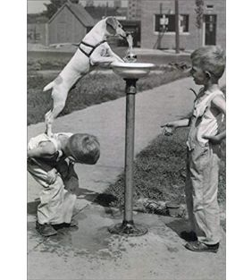 avanti-press_kids-with-dog-water-fountain-encouragement-card_01.jpg
