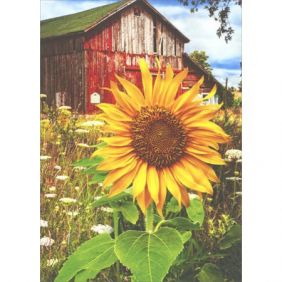 avanti-press_sunflower-barn-blank_01.jpeg