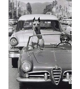 avanti-press_top-down-dog-in-car-america-collection-birthday-card_01.jpg