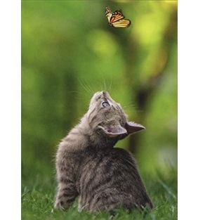 avanti_cat-butterfly-support-greeting-card_01.jpg