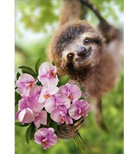 avanti_mothers-day-sloth-flowers_01.jpg