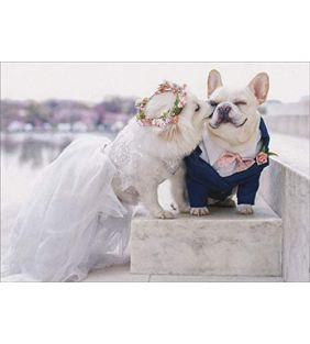 avanti_wedding-dogs-congrats-card_01.jpg