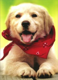 DOG WITH SCARF THANK YOU CARD