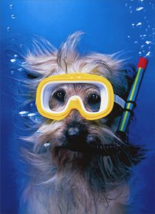 SNORKEL DOG THANK YOU CARD