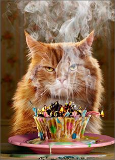 BIRTHDAY CUPCAKE CAT BIRTHDAY