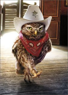 COWBOY OWL BIRTHDAY CARD