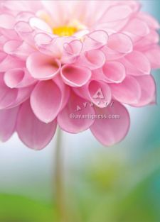 PINK FLOWER ENCOURAGEMENT