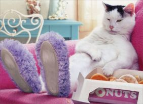 CAT WEARING SLIPPERS FUNNY