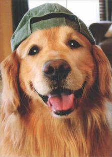 GOLDEN RETRIEVER/BASEBALL BLAN