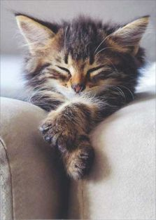 SLEEPING KITTEN BLANK CARD