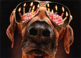 DOG BIRTHDAY CANDLES & SUNGLASSES