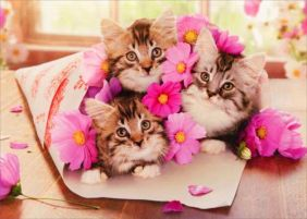 KITTEN BOUQUET BIRTHDAY