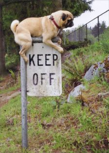 PUG KEEP OFF SIGN BIRTHDAY