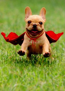 FRENCHIE W/RED CAPE THANK YOU
