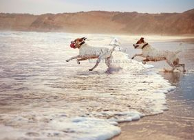 TWO DOGS IN SURF ROMANCE