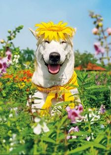 WHITE DOG W/SUNFLOWER FUNNY