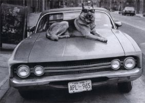 DOG ON HOOD OF CAR BIRTHDAY