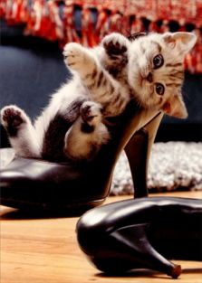 KITTEN IN HIGH HEEL FRIENDSHIP