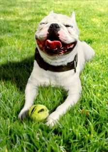 SMILING DOG WITH BALL BIRTHDAY