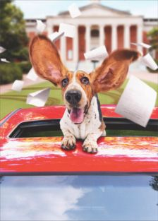 BASSET HOUND IN LIMO GRADUATION CARD