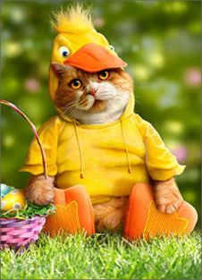 CAT IN DUCK COSTUME EASTER