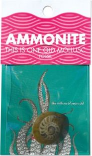 AMMONITE-FOSSIL #CCAMM BY COMP