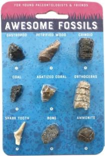 AWESOME FOSSILS CARD #CCFOS BY