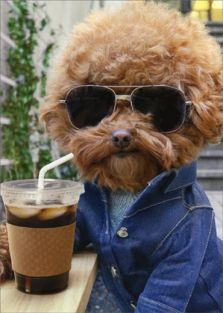 COOL DOG WITH COFFEE BIRTHDAY