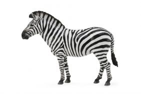 COMMON ZEBRA - COLLECTA