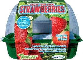 (D)GROW YOUR OWN STRAWBERRIES