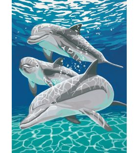 dimensions_sunlit-dolphins_01.jpg