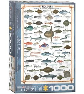 eurographics_sea-fish-1000-pc_01.jpg
