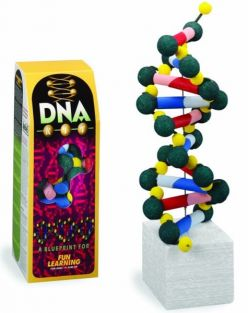 BUILD YOUR OWN DNA MODEL
