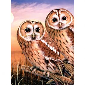 royal-langnickel_paint-by-number-tawny-owls-9x12_01.jpeg