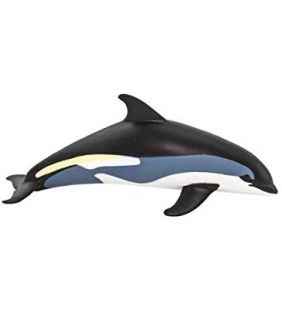safari_atlantic-white-sided-dolphin_01.jpg